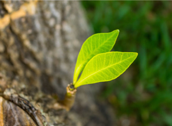 Leaf-MRET-image-01